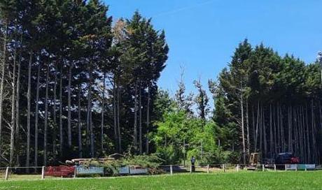 Abattage d'arbres de vingt mètres de haut à Montauban - Arlequin Espaces Verts
