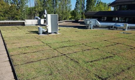 Spécialiste pour la pose de toiture végétalisée à Montauban