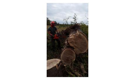 Entreprise spécialisée abattage gros chêne Montauban